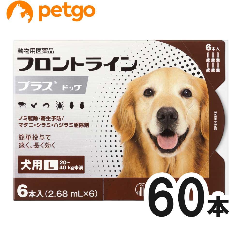 【10箱セット】犬用フロントラインプラスドッグL 20kg~40kg 6本(6ピペット)(動物用医薬品)【あす楽】