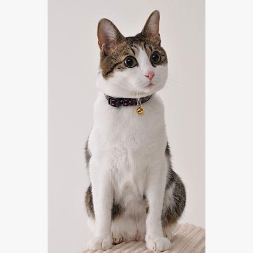 ペティオ CAT COLLAR キャットカラー 猫専用首輪 ドットレザーカラー 革 ピンク 桃 平首輪 カラー 合皮 猫 ネコ 短毛猫 長毛猫 ピンクとイエローのドットが大人っぽい可愛さを演出 Petio