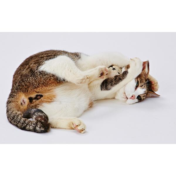 ペティオ ナチュラルボール セットボックス 猫用おもちゃ 一人遊び ボール 全猫種 短毛猫 長毛猫 楽しく遊ぼう ナチュラル素材使用のボールアソートセット 音が鳴るのでネコちゃん大興奮 カラカラ音が鳴る Petio ※種類は選べません