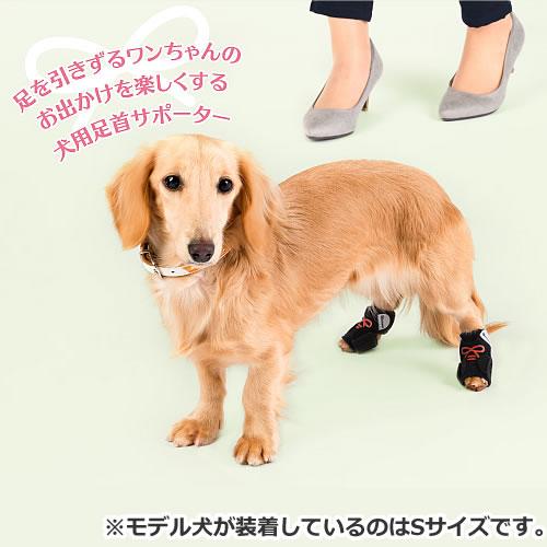 コンビ コムペット ペット用サポーター 小型犬用 ホロノア ワンソク Lサイズ ペット用 足首サポーター レッド/ブルー