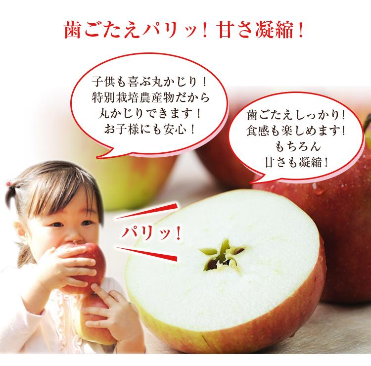 青森県産 葉とらずりんご 3kg箱 ピカイチ野菜くん リンゴジュース 家庭用 訳あり B品 成田りんご園 陽向果 特許取得 人参ジュース りんご 林檎