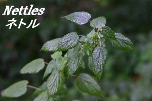 Eclectic the eclectic Institute Inc.() contains plenty of Nettles (nettle) 90 grain safety and safe herbal supplements minerals, calcium, iron, magnesium, etc.
