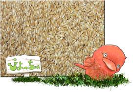 カナリヤシード 25kg 紙袋入 : 鳥の餌 えさ