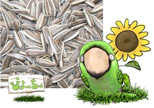 小粒 未使用 ひまわりの種 5kg×2 えさ : 鳥の餌 春の新作続々