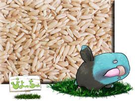 ムキオーツ (ムキ えん麦 ) 10kg×1 紙袋入 : 鳥の餌 えさ