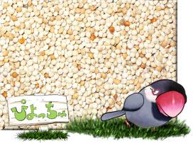 玄 キビ 500g×2 : 鳥の餌 えさ