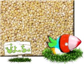 ムキキビ 25kg×1 紙袋入 : 鳥の餌 えさ