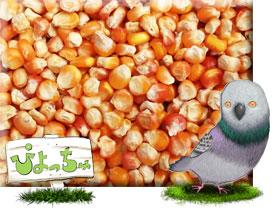 メイズ (とうもろこし) 500g×3 : 鳥の餌 えさ