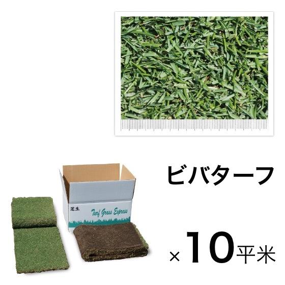 庭を天然芝に変えるロール芝 緑の切り芝ターフ天然芝生マット 寒さに強い芝生シート 寒冷地向きの天然芝生シバ・しば 西洋芝マット ビバターフ(ケンタッキーブルーグラス)10平米 寒冷地向け 天然芝 送料無料
