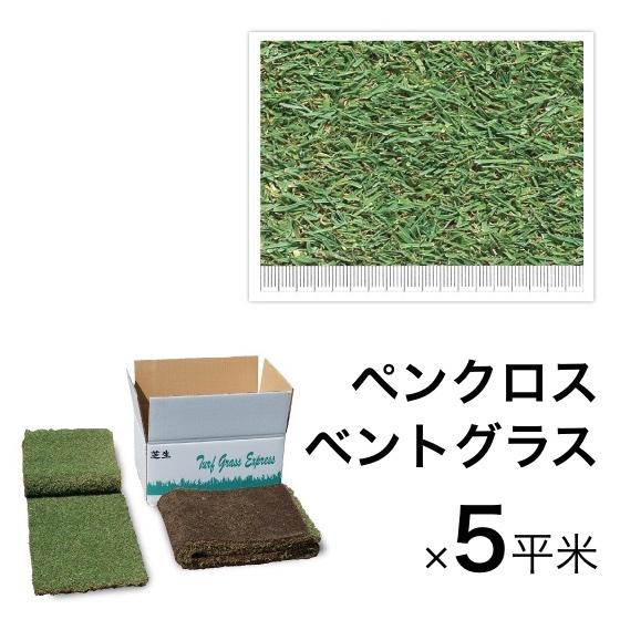西洋芝マット ペンクロス・ベントグラス5平米 寒冷地向け天然芝 黒土仕様 送料無料