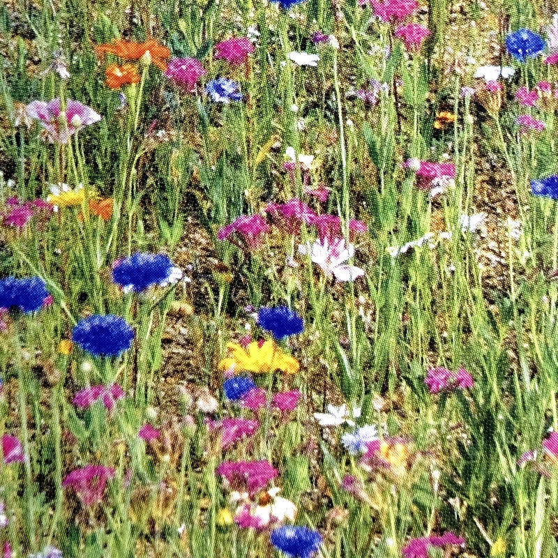 緑化用 フラワーミックス ベビーブルーマーズ 15品種 種 1kg 種のみの販売 侵食防止 緑化 法面 種子 紅大 共B 代引不可 個人宅配送不可