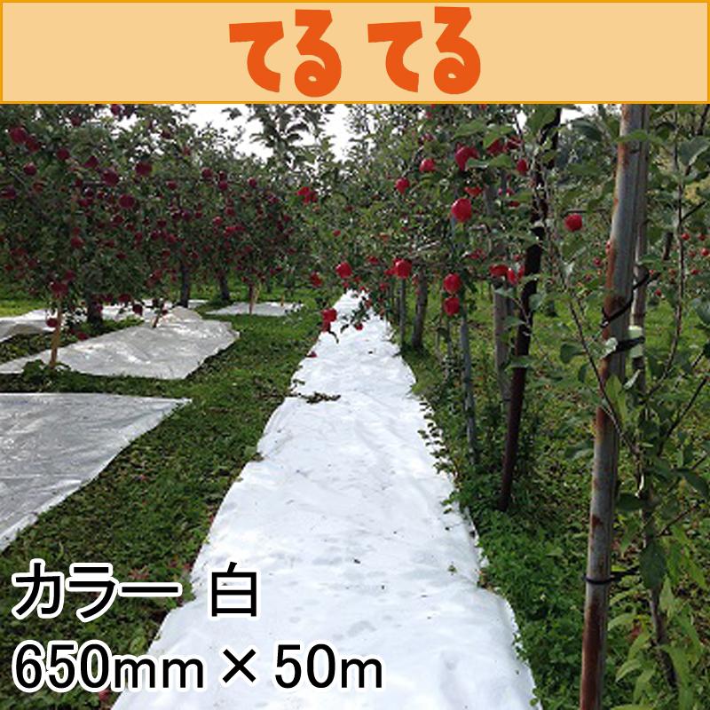 【6本】 650mm × 50m 白 てるてる 遮光ネット 寒冷紗 JX ANCI タ種 【代引不可】