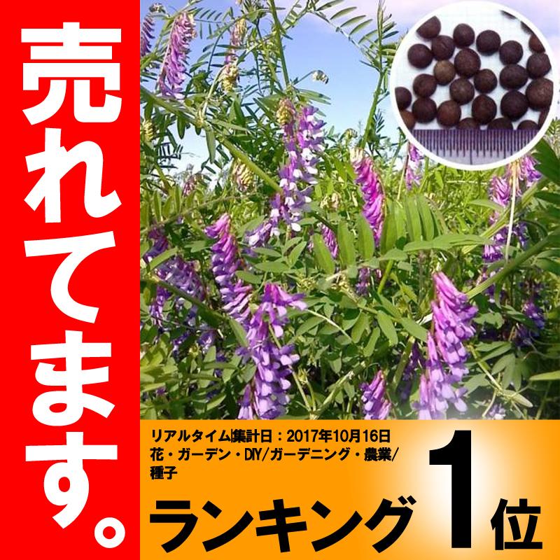 【種 10kg】 藤えもん (マッサ) ヘアリーベッチ 早生 緑肥 ミツバチの蜜源に 雪印種苗 植物 米S【代引不可】