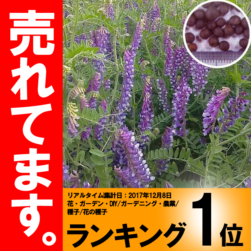 【種 10kg】 寒太郎 (サバン) ヘアリーベッチ 晩生 緑肥 ミツバチの蜜源に 雪印種苗 植物 米S【代引不可】