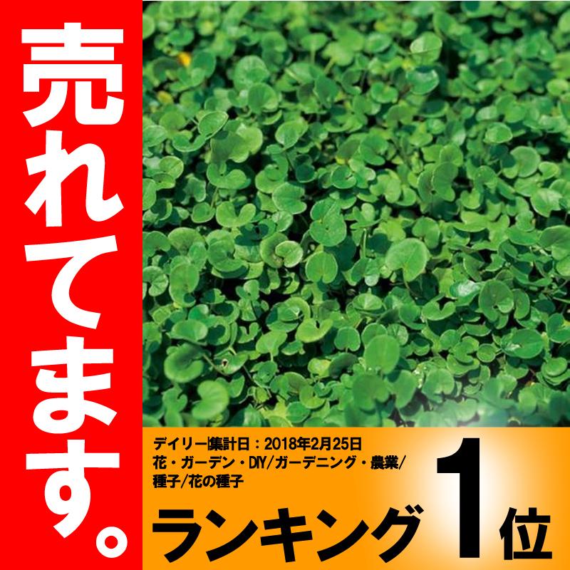 【種 2kg】 ダイカンドラ コート種子 雑草対策 土壌保全 果樹草生 緑肥 [播種期:4~7月] 雪印種苗 米S【代引不可】