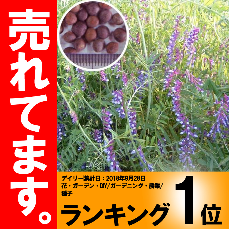 【種 10kg】 まめ助 ヘアリーベッチ 晩生 緑肥 ミツバチの蜜源に 雪印種苗 植物 米S【代引不可】