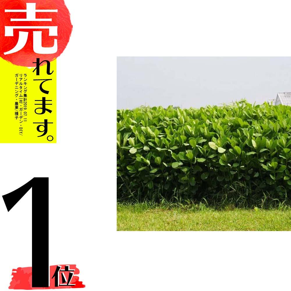 【種 5kg】 クロタラリア ネマックス 畑地 線虫対策 緑肥 [播種期:5~7月] 雪印種苗 米S【代引不可】