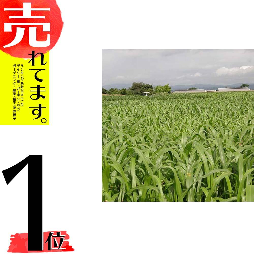 【種 6kg】 スーダン リッチスーダン 早生 酪農 畜産 緑肥 [播種期:5~8月] 雪印種苗 米S【代引不可】