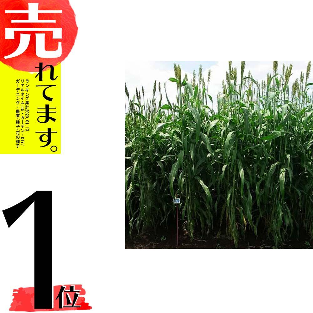 【種 5kg】 ソルガム シュガーグレイズ 早生 酪農 畜産 緑肥 [播種期:4~8月] 雪印種苗 米S【代引不可】