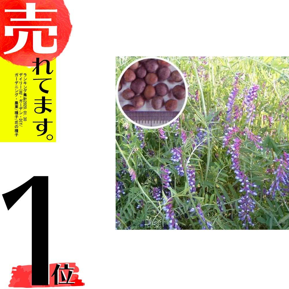【種 10kg】 まめ助 (ナモイ) ヘアリーベッチ 晩生 緑肥 ミツバチの蜜源に 雪印種苗 植物 米S【代引不可】