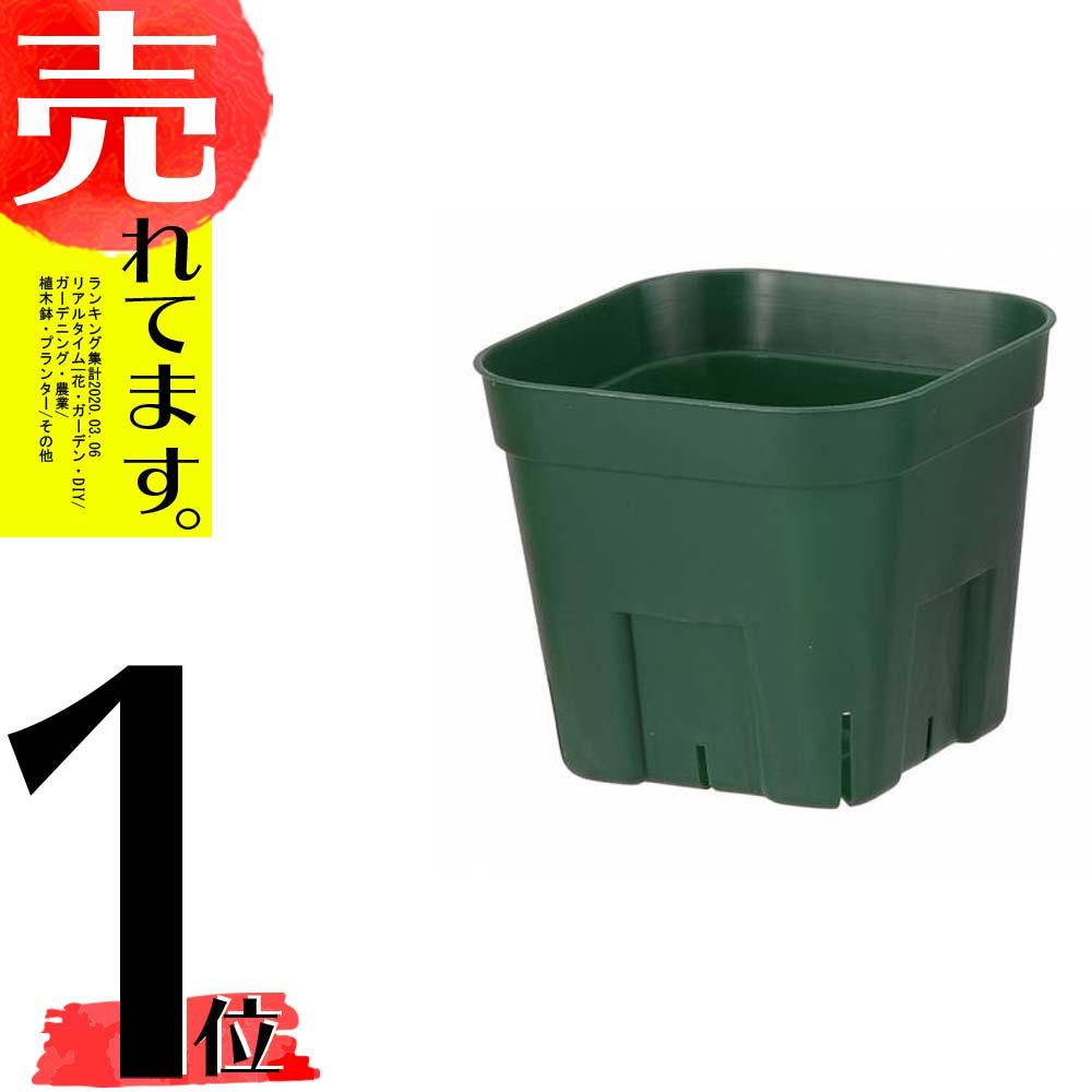小型ポット 800個 105型 モスグリーン 35%OFF プレステラ お得クーポン発行中 ポット 鉢 個人宅不可 代引不可 おしゃれ 日本ポリ鉢販売 タ種 北海道不可