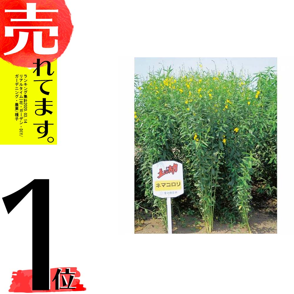 【種 10kg】 クロタラリア ネマコロリ 畑地 線虫対策 緑肥 [播種期:2~9月] 雪印種苗 米S【代引不可】
