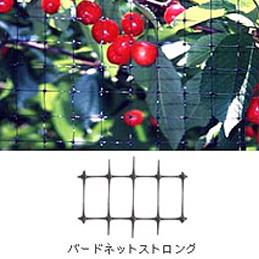 【2本】 バードネットストロング 目合18×28mm 2.4m×50m 黒 目付49g/m2 OB2650 コンウェッドネット タ種【代引不可】