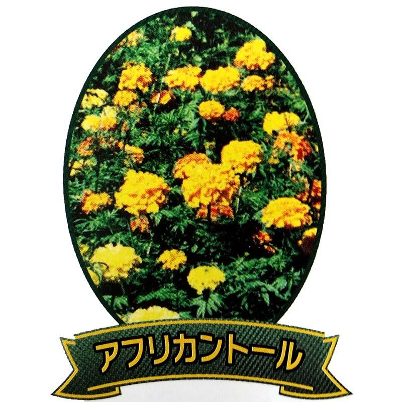 【種 3L】 マリーゴールド アフリカントール 緑肥 景観美化 [播種期:5~7月] 雪印種苗 米S【代引不可】