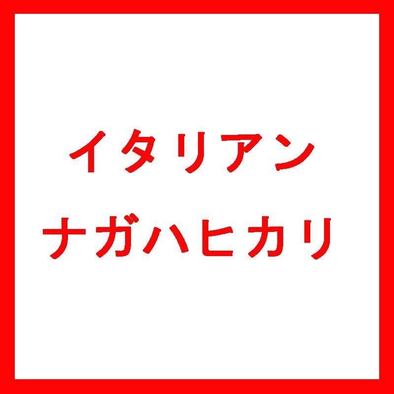 【種 10kg】 イタリアンライグラス ナガハヒカリ 中生 酪農 畜産 [播種期:9~11月] 雪印種苗 米S【代引不可】