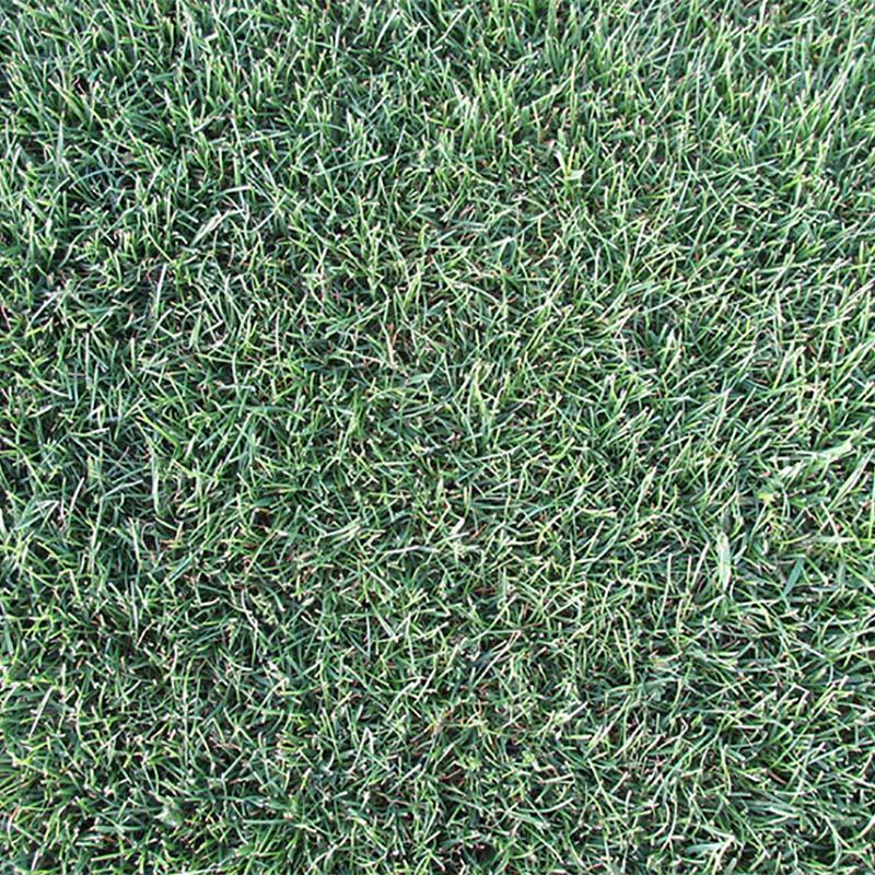 【種 10kg】 ペレニアルライグラス マンハッタン5 芝 緑化用 [播種期:3~10月] 雪印種苗 米S【代引不可】