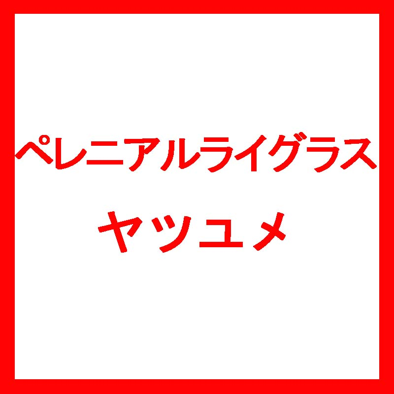 【種 5kg】 ペレニアルライグラス ヤツユメ 晩生 酪農 畜産 [播種期:4~10月] 雪印種苗 米S【代引不可】