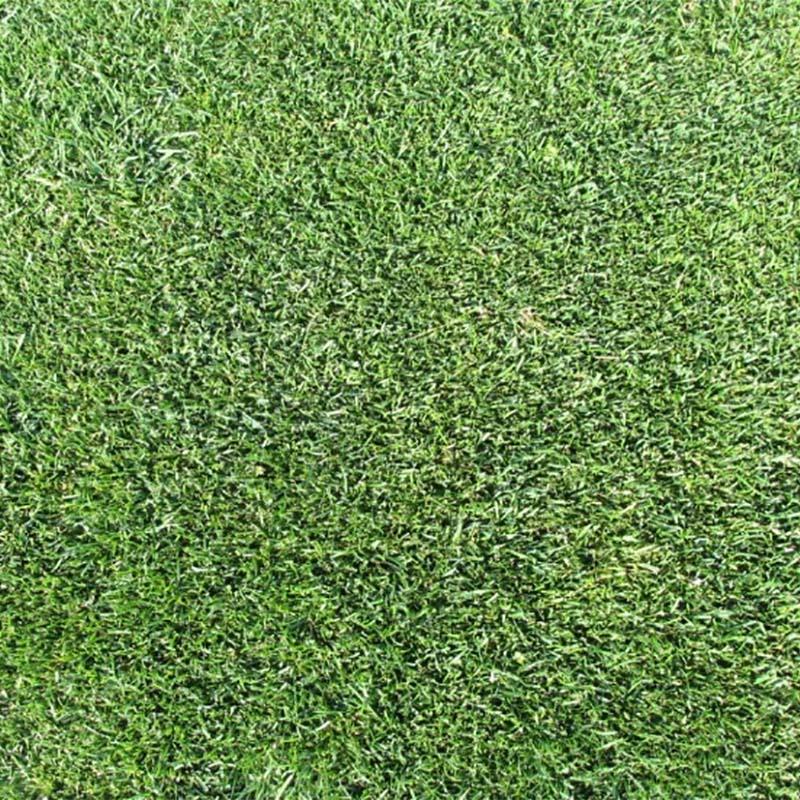 【種 3kg】 ケンタッキーブルーグラス ビーウィッチ 緑化用 芝生用 緑肥 [播種期:3~10月] 雪印種苗 米S【代引不可】