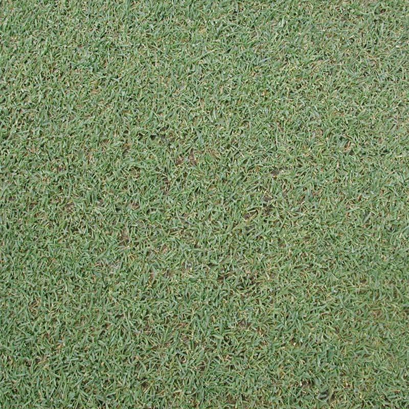 【種 2kg】 ベントグラス ペンクロス コート種子 芝生用 緑肥 [播種期:3~10月] 雪印種苗 米S【代引不可】