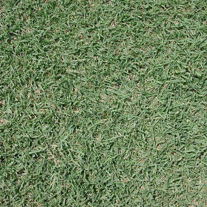【種 2kg】 バミューダグラス サンデビル2 芝生用 矮性品種 緑肥 [播種期:4~7月] 雪印種苗 米S【代引不可】