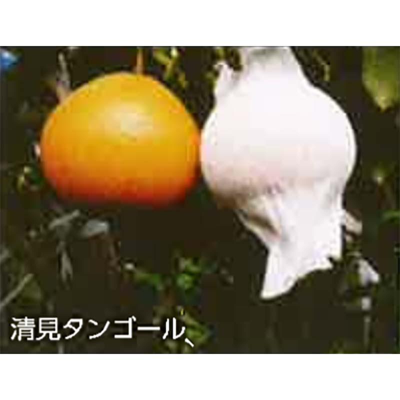 【3500枚】 果実袋 サンテ S-6 15cm 白 ミカンの日焼防止・着色促進・樹上越冬など みかん 石川殖産 D