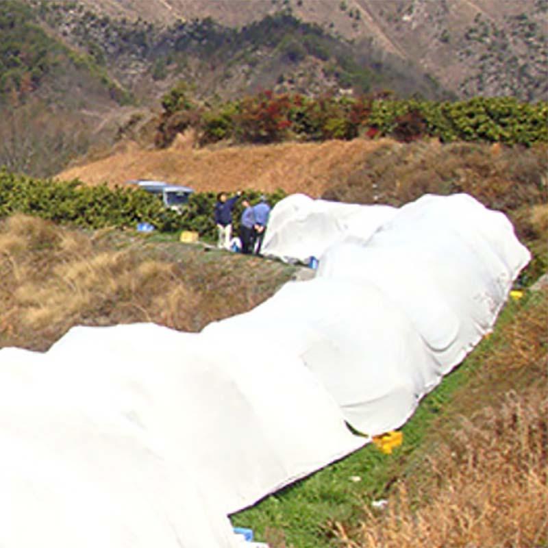 サニーセブン T-750 3m×100m 果樹保護シート 柑橘系 被覆資材 石川殖産 D