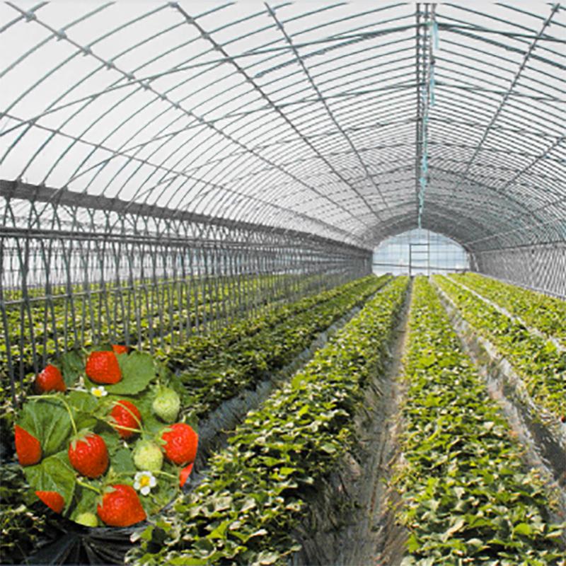 農業用フィルム スーパーバーナルライト 厚さ0.1mm × 幅185cm × 長さ100m ハウスのフィルムの張替え作業が削減 昭和パックス カ施