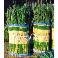 【50枚】 マキマキ 長ネギ ・ 枝豆 用 収穫 用巻きネット 60×125cm タ種【代引不可】