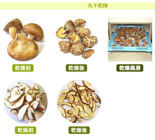 食品烘乾機MINIMINI II乾菜,幹果製造電烘乾機大紀產業株式會社