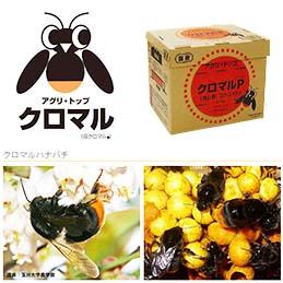 受粉用 ハチ です。有機栽培に。省力化に。 北海道不可・要着日指定・時間指定不可 受粉用蜂 ハチ 50頭以上 花粉・蜜・巣箱セット アグリセクトクロマル プレミアム クロマルハナバチ タ種 代引不可