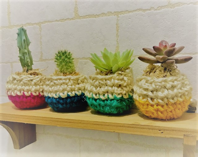 Pocketbard A Fleshy Plant Cactus