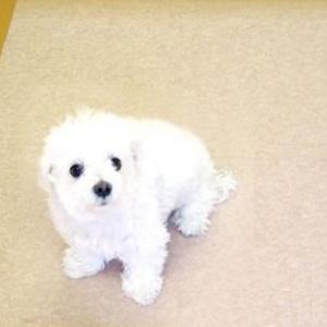 犬用 廊下マット 犬用消臭マット 廊下敷きシート 犬消臭マット 600cm