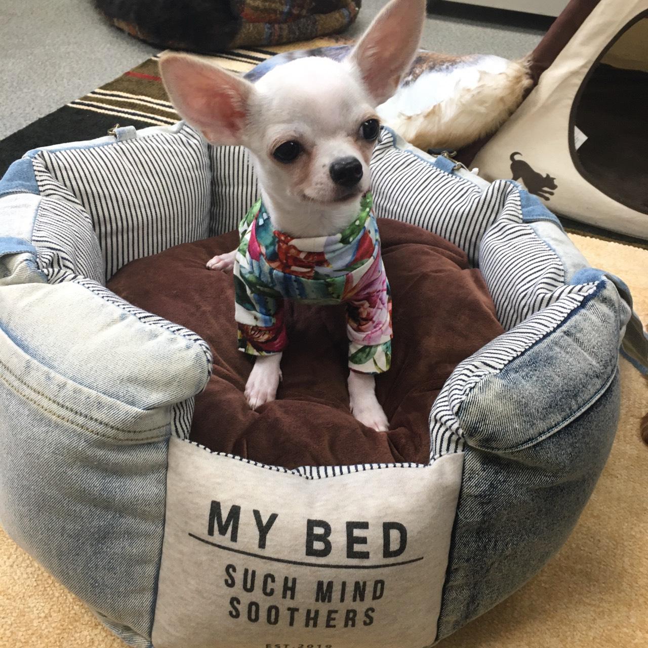 おうちベッドでそのままドライブ Solgra (ソルグラ)デニムドライブベッド ウォッシュ加工生地のため商品ごとの色に違いがあります。 犬 小型犬 超小型犬 ベッド おしゃれデニム ドライビングクッション フードサンプルプレゼント