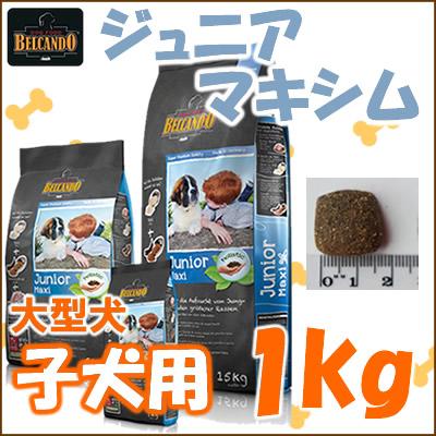 钟 cond 初中格言 1 公斤老从旧大 4 个月狗种群增长的狗 / 保质期如果短 / 5000 日元 / 在
