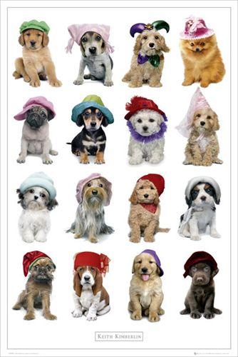 キース キンバーリン ドッグ 爆安 ポスター Keith Hats Dogs Kimberlin 全商品オープニング価格
