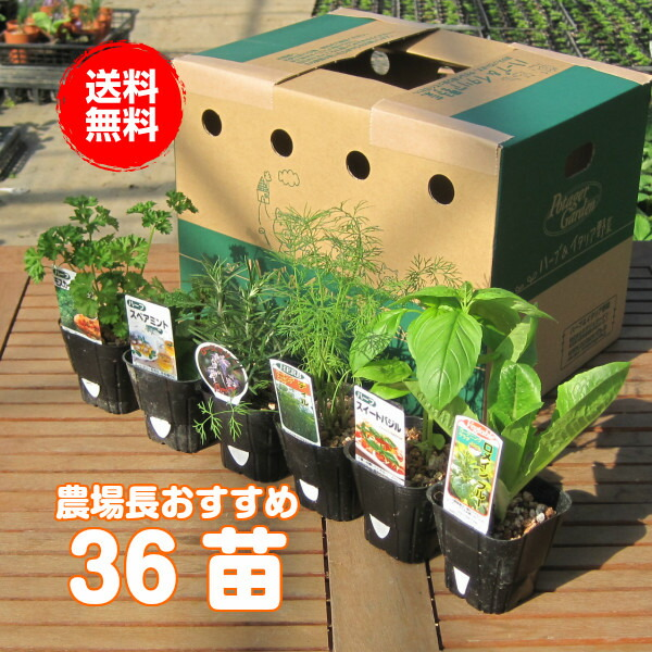 Today point 5 times! 36 herb seedling sets (store specializing in group on