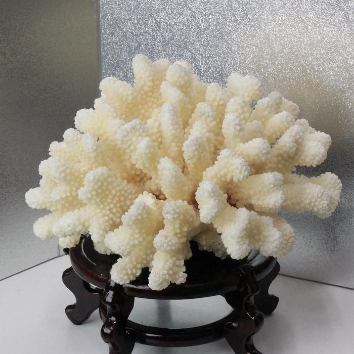 白珊瑚 置物|珊瑚 fossil Coral サンゴ コーラル さんご 化石 フォシル【置物 白珊瑚 インテリア 癒し】メンズ Men's レディース Ladies 天然石 海外直輸入価格 白珊瑚