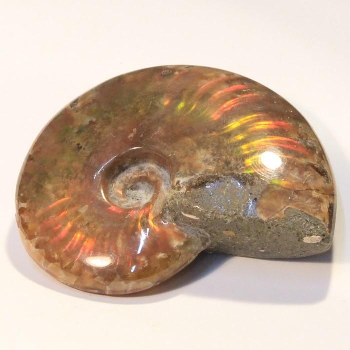 アンモナイト 化石|Ammonite アンモライト アンモン貝 レインボー fossil アンモナイト【置物 古代 化石 fossil 原石 鉱石 開運 インテリア 古生物 標本】メンズ Men's レディース 天然石  限定 一点物 アンモナイト