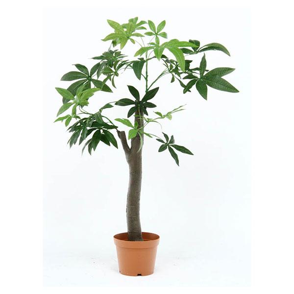 【送料無料】不二貿易 52665 観葉植物 パキラ 朴の木タイプ【同梱配送不可】【代引き不可】【沖縄・北海道・離島配送不可】