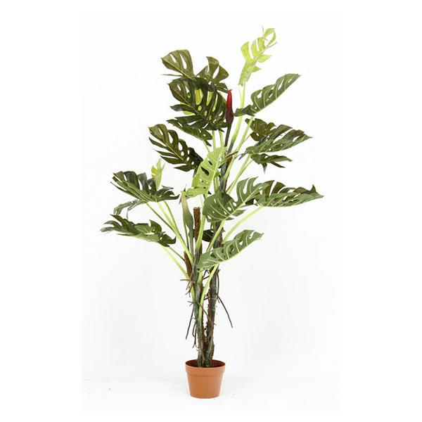 不二貿易 52667 観葉植物 スプリット 22 メーカー直送